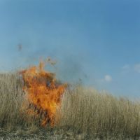 In the light of Rinko Kawauchi