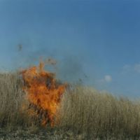 Death and rebirth: Untitled, from the 'Ametsuchi' series (2012). | © RINKO KAWAUCHI