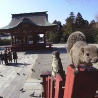 'Taiwan Squirrel (Native to Taiwan) at Tsurugaoka Hachiman Shrine' | &#169; MANABU MIYAZAKI