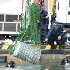 The convoluted crime spree of Amagasaki's 'piranha family'
