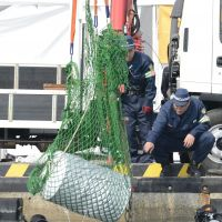 Dragnet: Police raise a concrete-filled drum containing the corpse of Jiro Hashimoto from the harbor in Bizen, Okayama Prefecture, on Oct. 30. | KYODO