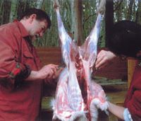 Old Nic and Afan Trust-staff helper Hisashi Kasai skin a deer | KENJI MINAMI PHOTOS
