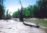A river drying up in New South Wales, Australia.