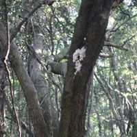 Forest wonders: A tree in the woods on Hachijo Island sports a fine crop of fungus | KUNIKO OTSUKI PHOTO