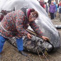 Lorino villagers in Chukotka, northeastern Russia, honor the soul of the dead whale with offerings of plants, bread, chocolates and a cigarette