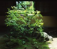 Give and  take:  A stand of bamboo  (take)  in the courtyard garden acts as a light well.