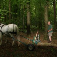 Doug works Ella, his Percheron mare, in the St. Fagan's Park woods. | C.W. NICOL PHOTOS