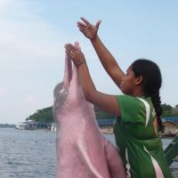 Magic moment: A young woman who lives beside the Rio Negro in Brazil's Anavilhanas National Park, and regularly gives food to Pink River Dolphins, here gets close to one of the remarkable mammals that has become used to humans &#8212; offering visitors a stunning photo opportunity as a result. | MARK BRAZIL PHOTOS