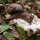 Slugs, snails and astonishing tales