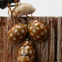 Globe trotters: Ladybugs and spiders are among the insects that migrate with the breeze — along with dust particles that are blown all across the world. | MARK BRAZIL PHOTOS