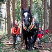 Samurai King makes light work of hauling heavy logs.