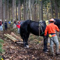 Team work: Samurai King and Takashi Iwama work to lighten the national forest.