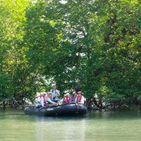 Watery roots: An excursion into the mangroves of Myanmar. These wondrous trees thrive in cloying conditions that would kill most species of plants. | JACK GROVE