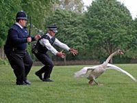 'Hot Fuzz' | © 2006 UNIVERSAL PICTURES INTERNATIONAL. ALL RIGHTS RESERVED.