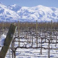Winemakers have been moving into Argentina to take advantage of the organic-friendly environment fostered by the low humidity and high altitudes.