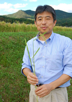 Bringing back a flavor of the past: Takaaki Yamauchi, president and master brewer at Fuchu Homare Shuzo in Ishioka City, Ibaraki Prefecture, holds a stalk of Wataribune rice, a strain that was widely used for sake for centuries until it fell into near-extinction around 50 years ago. | MELINDA JOE PHOTOS