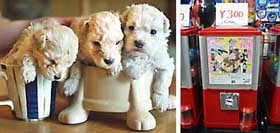Japanese shoppers can spend their hard-earned cash on tea-cup poodles (left) , a snip at 650,000 yen , or erotic figurines from gum machines, a reasonable 300 yen. | GEOFF BOTTING PHOTOS