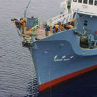 A harpooned minke whale dangles from the catcher ship Yushin Maru in the Southern Ocean on Dec. 16, 2001.