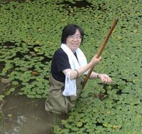 Izumi Washitani, a University of Tokyo professor of conservation ecology, at work researching floating-heart plants | PHOTO COURTESY OF IZUMI WASHITANI