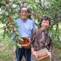 Cherry farmers Mitsuyo and Shunji Ono
