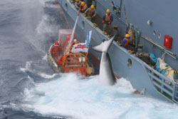 Whaling: the meat of the matter