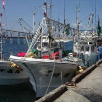 Ocean-going: Two 10-ton ippon zuri (one hook, one line) fishing boats moored to the quayside at Oma in Aomori Prefecture, from where they are taken out into the Tsugaru Strait between Honshu and Hokkaido in search of Pacific bluefin tuna. | HILLEL WRIGHT PHOTOS