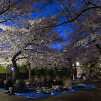 Some of Japan's top tourist draws: Cherry-blossom viewing, Hamarikyu Gardens in Tokyo and Shirakawa-go in Gifu Prefecture. | SKYE HOHMANN PHOTOS