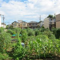 Green-fingered <em>gaijin</em> reaps alien harvest in Tokyo