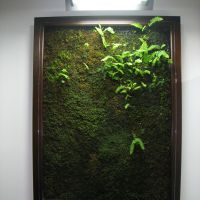 Verdant visuals: Kokemori developed a way to attach live moss to framed boxes that can be displayed indoors