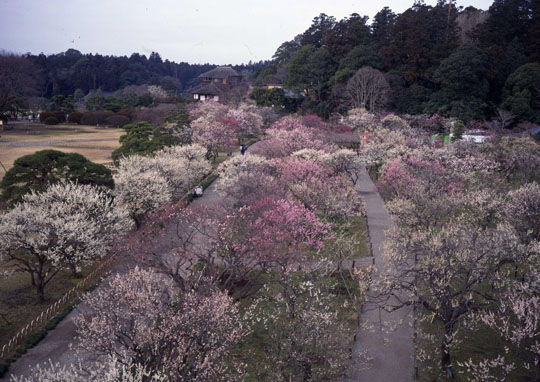 Plum viewing: A walk through the plum blossoms is a traditional way to welcome spring in Japan. | &#169; IBARAKI KANKOU BUSSAN KYOKAI / &#169; JNTO