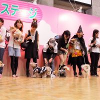 Dogs on the catwalk: Dog owners and their pets take part in a canine fashion show at last year's Pet Expo in Osaka. The event caters to all types of furry friends.