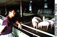 Chinese farmer Liu Binzheng, who raises pigs in the village of Lazarevskoye, Russia, surveys the fuits of his labor.