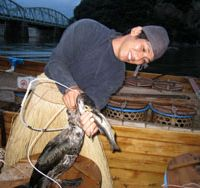 An ukai fisherman demonstrates how the cormorant regurgitates a fish it has caught.