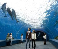 Flying flippers: An underwater tunnel in Fureai Lagoon enables close-up viewing at Hakkeijima Sea Paradise in Yokohama's Kanazawa Ward. | HAKKEIJIMA SEA PARADISE PHOTO