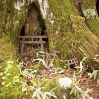 Nature spirits: This small shrine reflects the Shinto significance of the forests that cloak the lower slopes of the mountains.