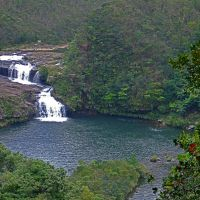 Untouched: Maryudo waterfall on the Urauchi River (above); and mangroves, which flourish far inland on Iriomote.