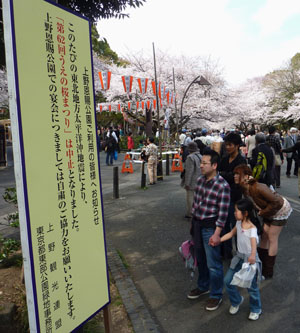 Thrill is gone: Visitors view a notice  that the 'sakura matsuri' cherry blossom festival has been canceled at Tokyo's Ueno Park on April 7 amid the subdued mood stemming from the disaster. | KYODO