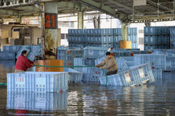 Cleanup time: Workers retrieve plastic containers from a fish market in Kesennuma, Miyagi Prefecture, on Feb. 28 following a tsunami caused by a massive earthquake in Chile. | KYODO PHOTO