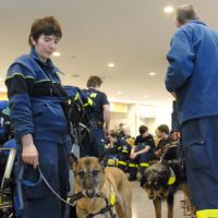German help: Rescue team members from Germany wait with their dogs for a bus to travel to Sendai on Sunday after arriving at Narita airport. | KYODO PHOTO