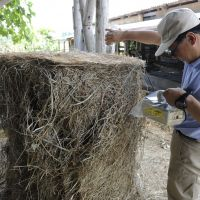 Last straw: A Fukushima prefectural official checks radiation levels in straw to be fed to cows at a farm in Minamisoma, Fukushima Prefecture, on July 13. | KYODO