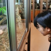 Save room for desert: A customer takes a look at a lizard at the Reptile Cafe/Yokohama Subtropical Teahouse on Aug. 11. | KYODO