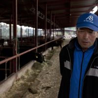 No go: Masami Yoshizawa on Sunday visits the cattle farm he worked at in Namie, Fukushima Prefecture, in the 20-km no-entry zone around the Fukushima No. 1 plant. | THE WASHINGTON POST
