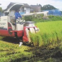 Rice registered under a new brand called Gohyakugawa is harvested in Nihonmatsu, Fukushima Prefecture, in late August. Gohyakugawa was developed by farmer Kiyokazu Suzuki (below), holding a bag of the rice, after eight years of testing. | KYODO PHOTOS