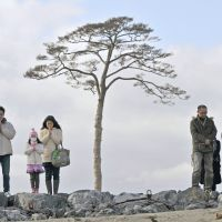 Families in Iwate Prefecture pray at 2:46 p.m. Sunday in front of Rikuzentakata's 'miracle pine.' | KYODO