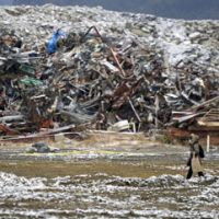 Hard road: With debris piled high in the background, women walk along a road Sunday to where their house stood before the March 11 tsunami hit Rikuzentakata, Iwate Prefecture. | KYODO