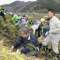 Doing his part: Environment minister Goshi Hosono (right) helps plant saplings on a soil-covered mound of disaster debris in Otsuchi, Iwate Prefecture, on Monday. | KYODO