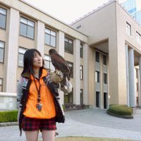 Bird's play: High school student Misato Ishibashi, a skilled falconer, shows off her Harris hawk last month in the city of Saga, which has turned to her to combat scavenging crows. | KYODO