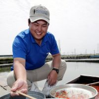 Endangered trade: Takashi Hattori tends to his goldfish in Tobishima, Aichi Prefecture, on May 16. | CHUNICHI SHIMBUN