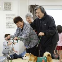 Canine care: Toru Oki, head of the International Therapy Dog Association, trains a dog that lost its owner in the March 11, 2011, disasters at a community center in Minamisoma, Fukushima Prefecture, on Sunday. | KYODO
