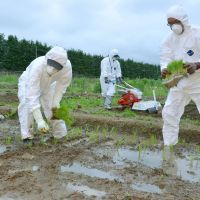 On trial: Rice is planted Tuesday in Okuma, Fukushima Prefecture, just 6 km from the wrecked No. 1 nuclear plant, to determine local levels of radioactive contamination. | KYODO